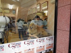 Dog grooming - Hiroshima