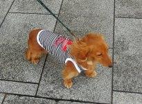 Cute dog - Onomichi