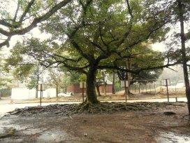 Incredibly old tree - Nara