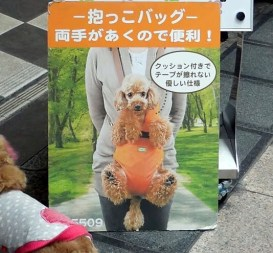 Just when you thought you had seen it all.... - Osaka