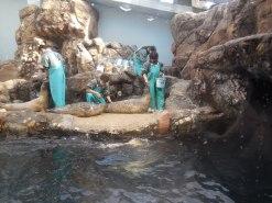 Harbor Seal - Osaka Aquarium