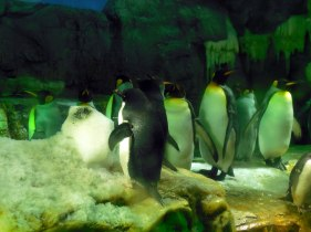 Penguins - Osaka Aquarium - January 2013