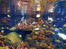 Fish - Osaka Aquarium