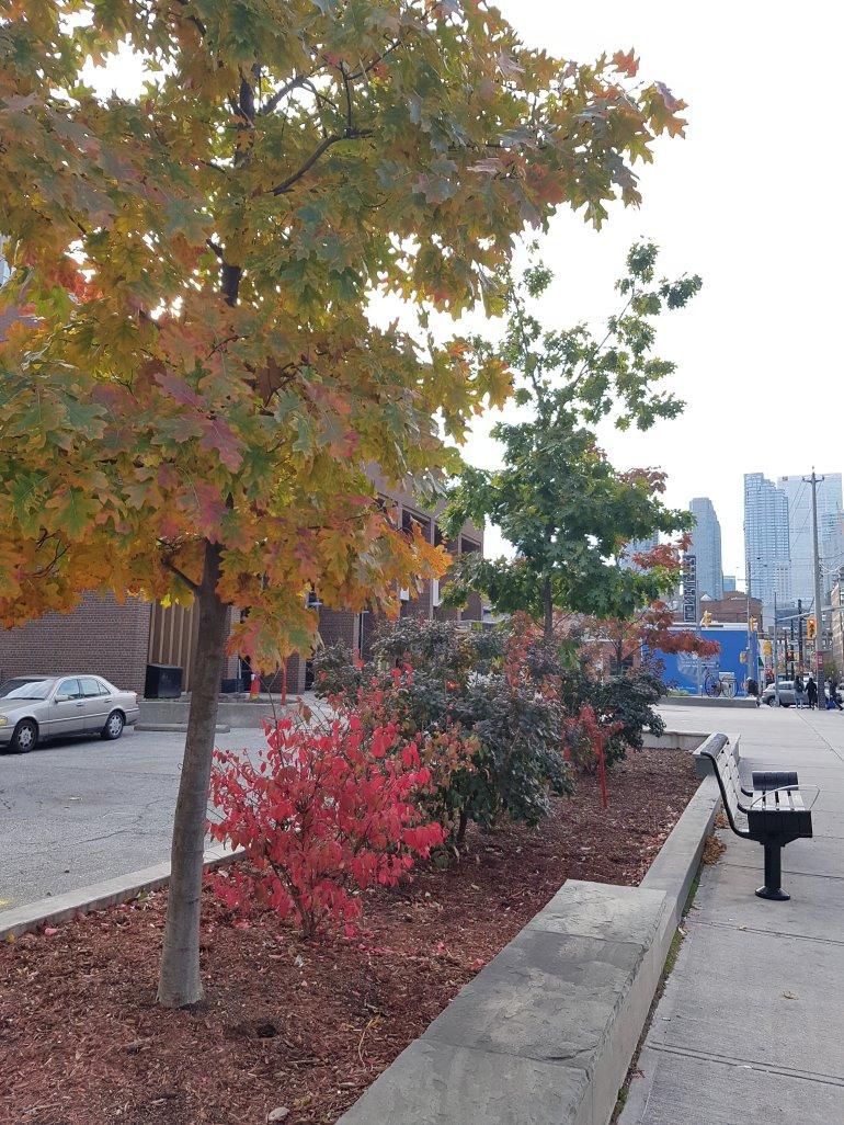 Outside the Toronto Firehall, Toronto
